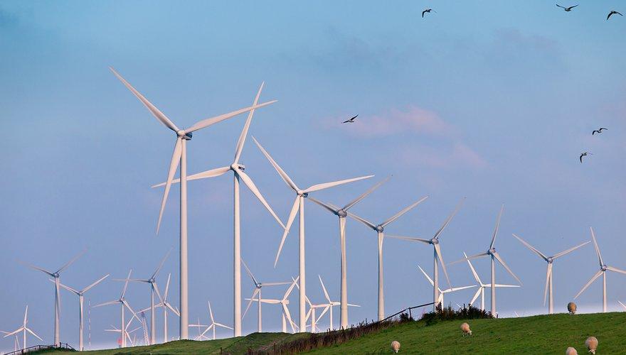 Windturbines met trekvogels / Shutterstock