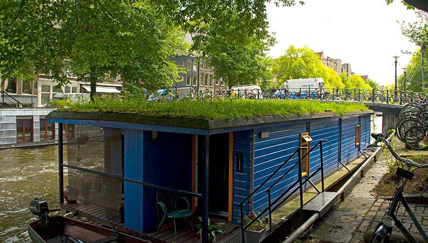 Groen dak Amsterdam / Hanna Hirsch