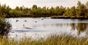 Eenden in De Peel / Shutterstock