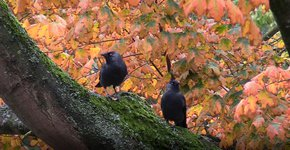 Videostill SM herfst21 vogelgroepen