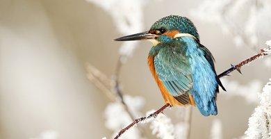 IJsvogel / Shutterstock