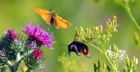 Insect vlinder / Pixabay