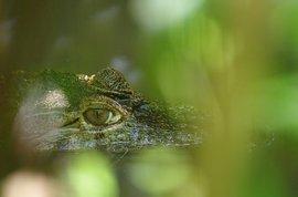 Krokodil / Pixabay