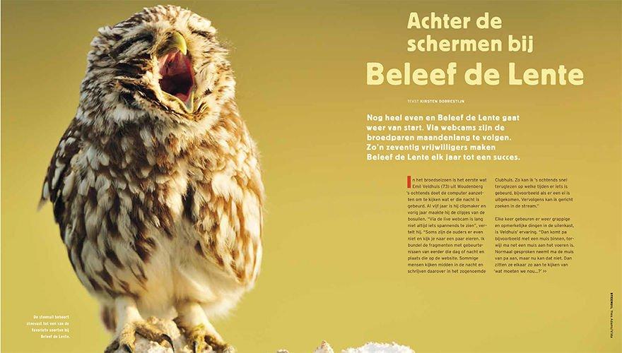 Spread beleefdelente - Vogels1701