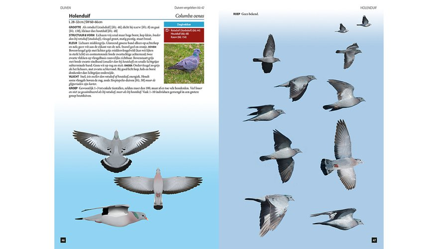 Spread holenduif Vogels in vlucht