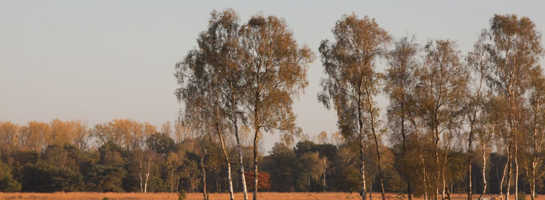 Strabrechtse Heide / Agami