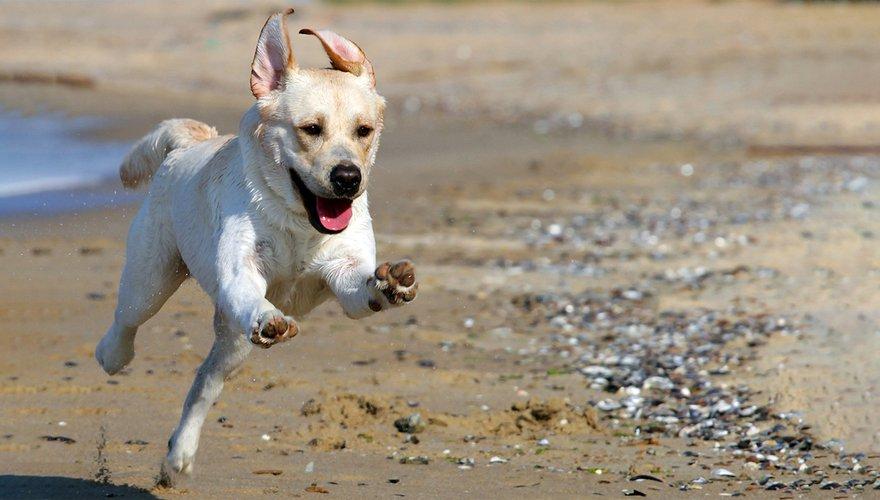 Hond / Shutterstock