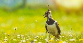 Kievit / Shutterstock
