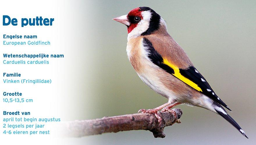 putter paspoort tuinvogelcursus