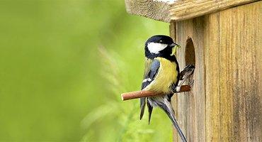 Koolmees op nestkast / Shutterstock