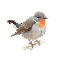 Kleine vliegenvanger / Elwin van der Kolk