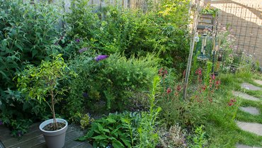 Haag in tuin van Esther en Marcel / Hans Peeters