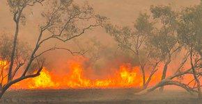 Bosbranden in Australie / Shutterstock