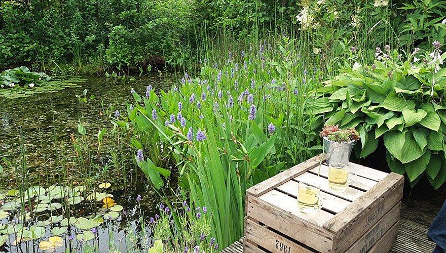 Vijver  in de tuin / Anna Kemp