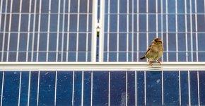 Huismus op zonnepanelen / Shutterstock
