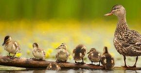 Krakeend / Shutterstock