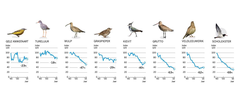 Grafiek weidevogels