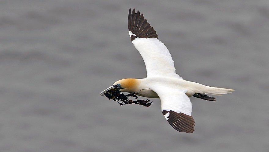 Jan van gent / Birdphoto