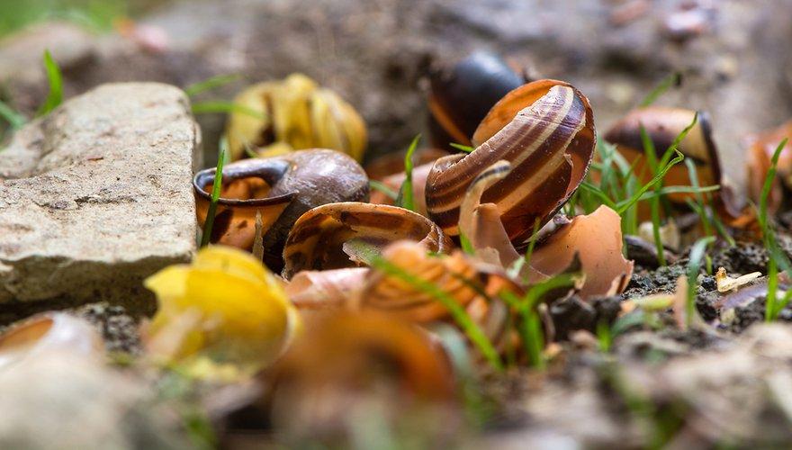 Slakkenhuizen / Shutterstock