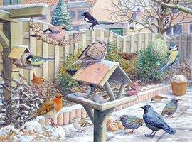 Kleurplaat stadsvogels Zaanstreek