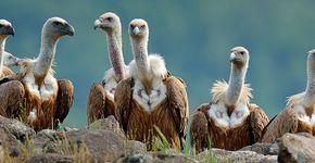 Vale gieren / Shutterstock