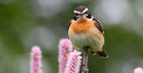 Paapje / Shutterstock