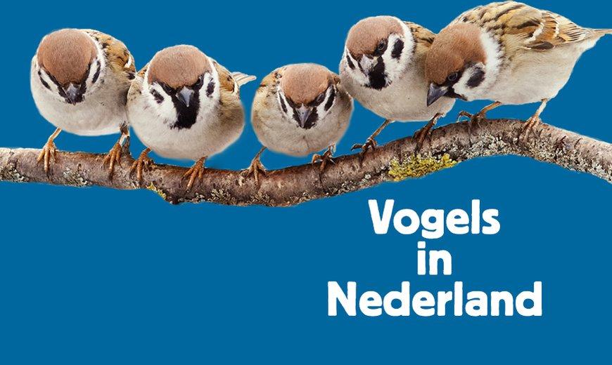 Cursus Vogels in Nederland