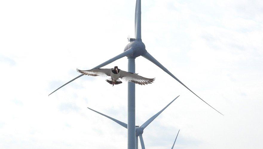 Scholekster windmolen / Paul Suijk - Fotogalerij