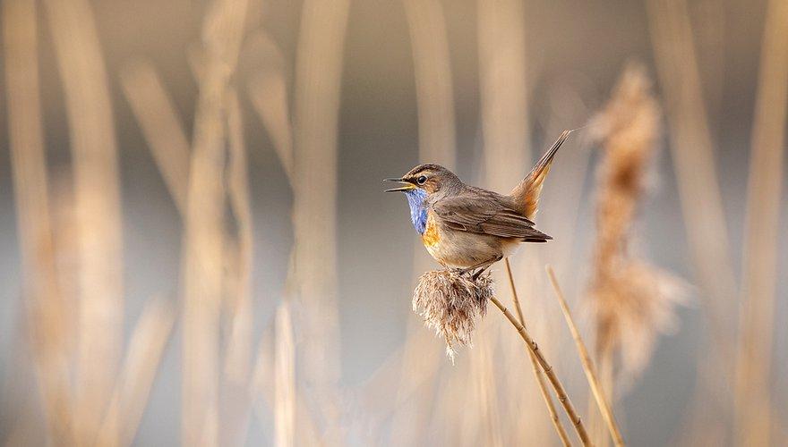 Blauwborst / Shutterstock