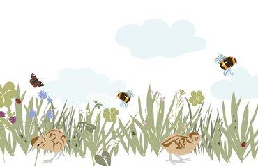 Insectenrijk grasland PARTRIDGE