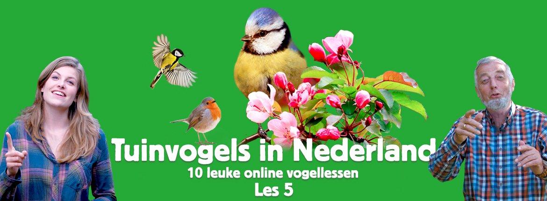 Header les 5 tuinvogelcursus