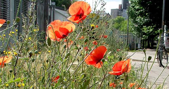 Bloemen in de stad / Jip Louwe Kooijmans
