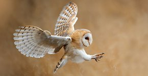 Kerkuil / Shutterstock
