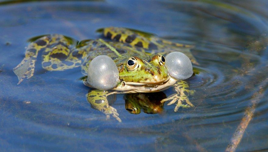 Groene kikker / Jelle de Jong