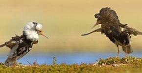Kemphaan / Shutterstock