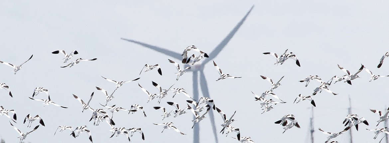 Kluut windmolen / Michiel Locker - Fotogalerij