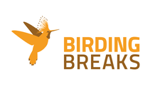 Logo BirdingBreaks