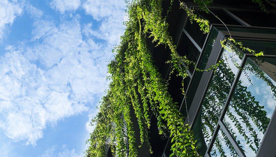 Groene muur / Shutterstock