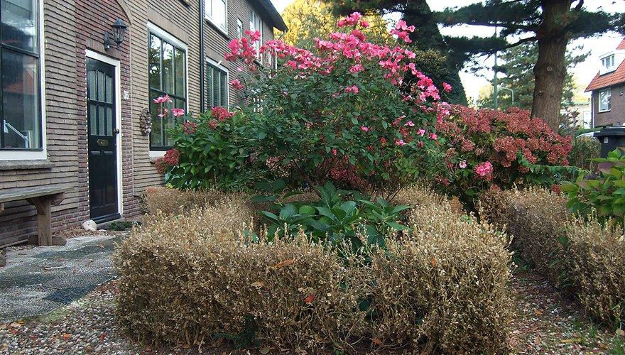 Buxushaag rond bloemperk