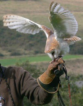 Kerkuil vogelshow / Hans Peeters