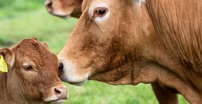 Koeien van Lenno en Marielle Hoogerbrugge / Fred van Diem