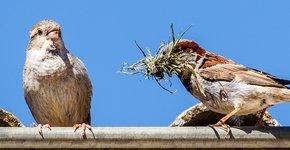 Huismussen / Shutterstock
