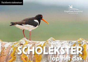Factsheets stadsvogels Scholekster