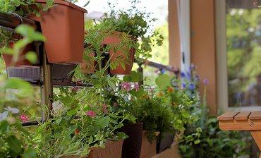 Balkonplanten / Shutterstock
