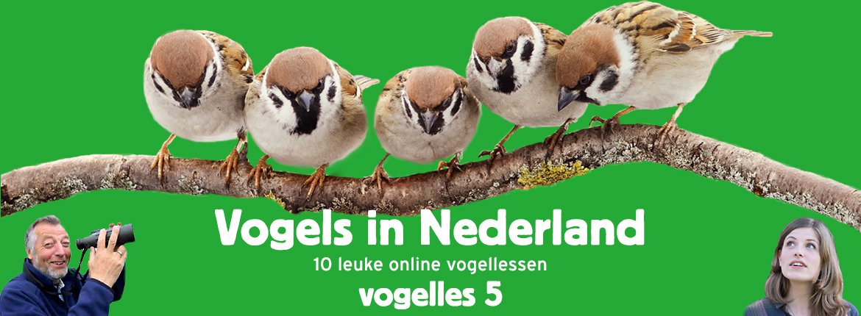 Vogels in Nederland - Vogelles 5
