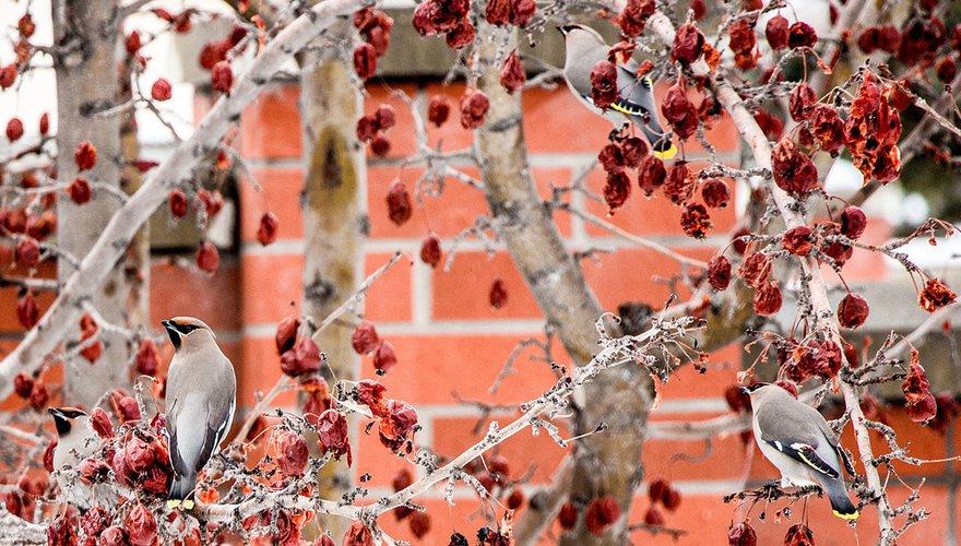 Pestvogels / Pixabay