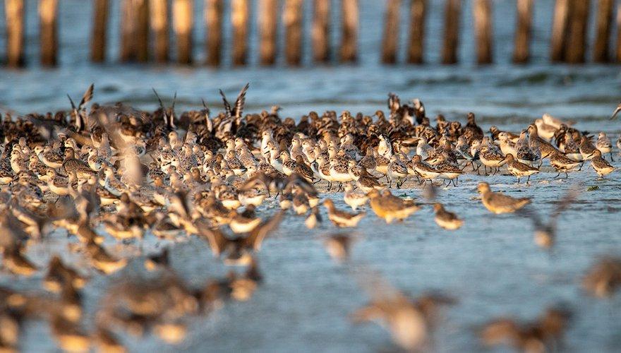 Wadvogels / Shutterstock