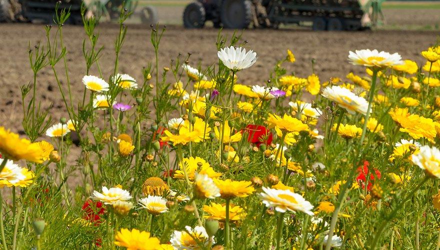Bloemenweide met tractor in de achtergrond / Shutterstock
