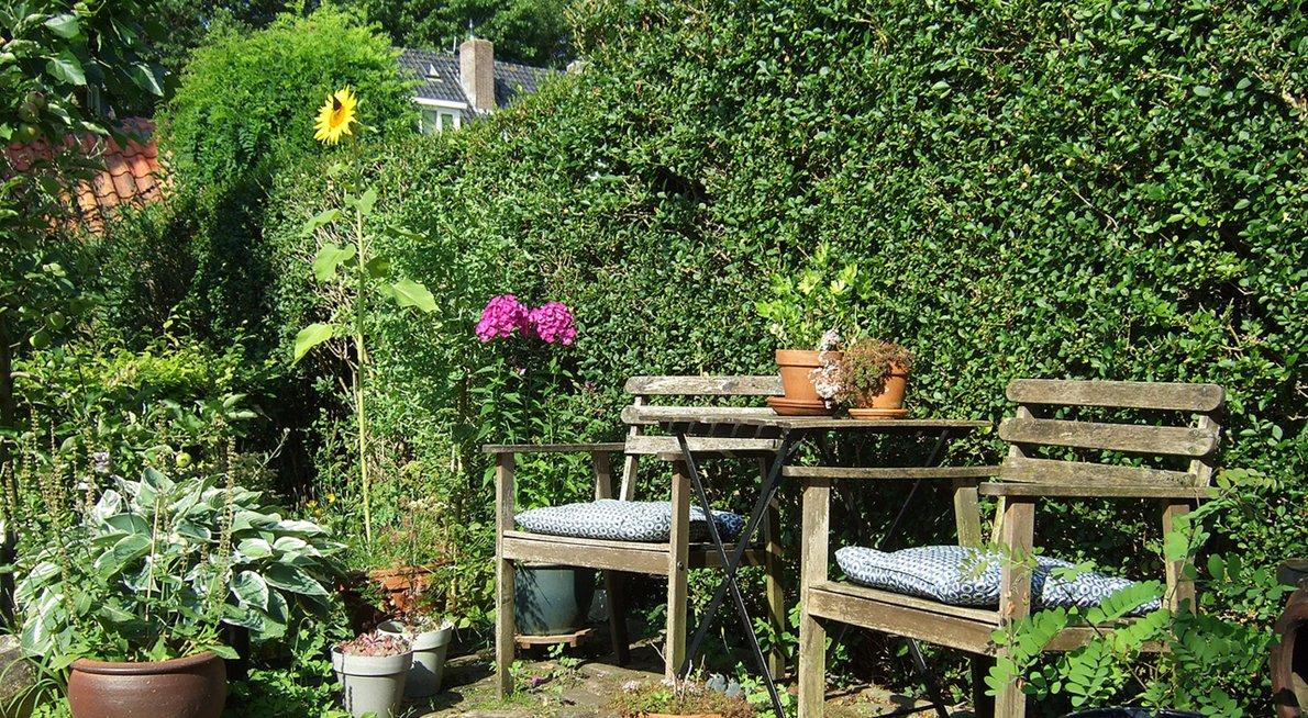 Haag in tuin / Jeanet van Zoelen