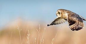 Velduil / Shutterstock